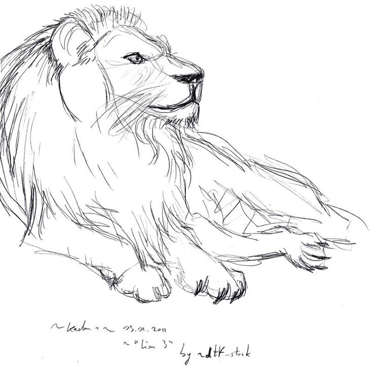 Les 56 meilleures images du tableau animal sur pinterest - Lion a dessiner ...