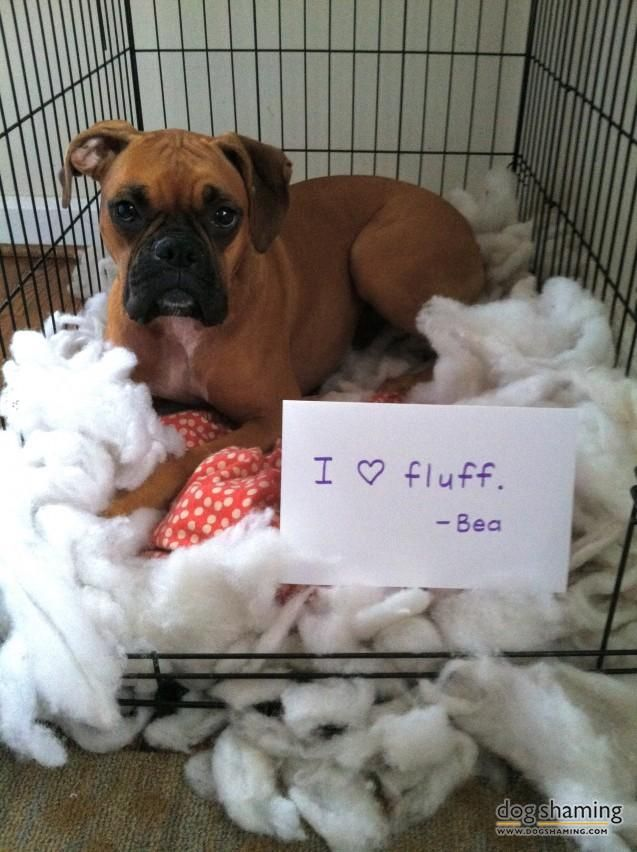 Excellent 57 best Puppy Dog Tales images on Pinterest | Funny animals, Funny  KD13