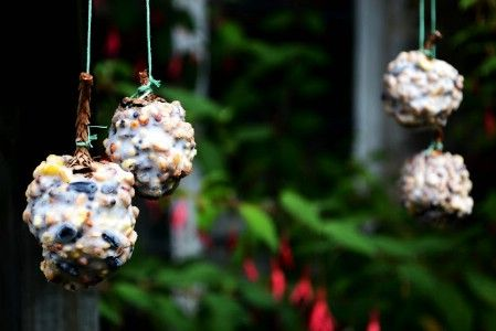 Pinecone Feeders - 23 DIY Birdfeeders That Will Fill Your Garden With Birds. Pinecone feeders are traditional. You can spread them with peanut butter or lard (or both) and then add birdseed. Whatever you prefer, these are really easy to make and are great projects for the kids. I'm going to make a bunch of them and decorate my patio trellis & trees with lots of little feeders; Merry Christmas Birdies!