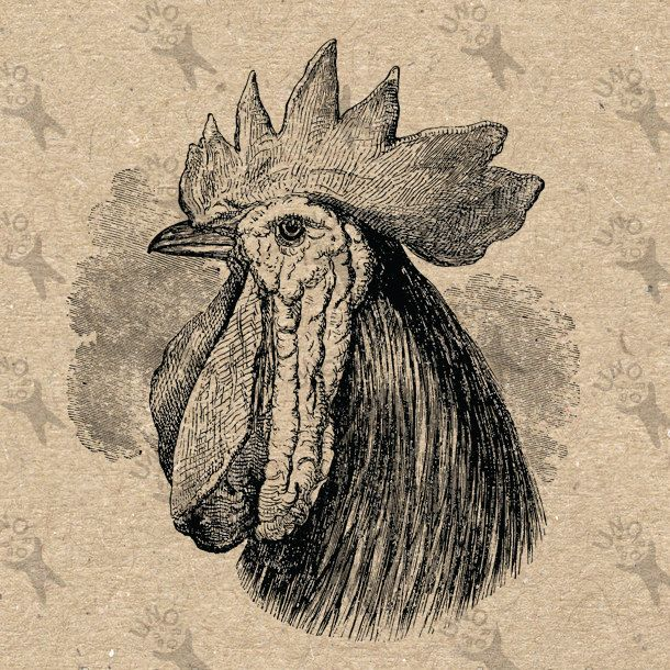Vintage Black and White image Cockerel Rooster Instant Download Digital printable retro drawing picture clipart graphic HQ 300dpi by UnoPrint on Etsy