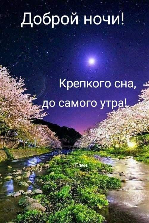 крепкого сна до утра картинки чудесные с цитатами персиковая уникальный европейский