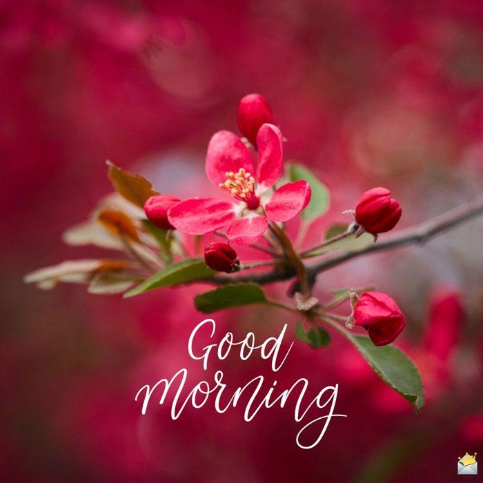 Good Morning Photo Image