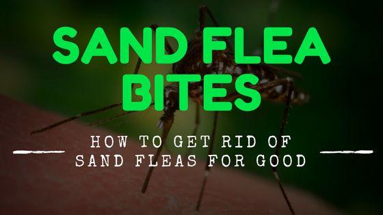 how to avoid sand fleas