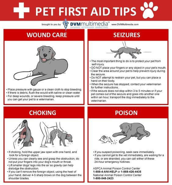 Pets First Aid Tips. These are some things that you can do to help your pet in case of choking, poisoning, seizures or injuries... Because your pet is part of your family and it is your duty to keep it safe.Add us on Facebook to get more visual guides like this: https://www.facebook.com/insidefirstaid/ #first #aid #medical #emergency #pets #choking #poisoning #seizures #injuries