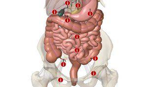 Verdauungsprobleme: Der Darm ist mein Schwarm - SPIEGEL ONLINE