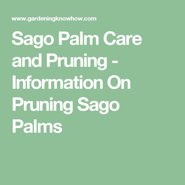 Sago Palm Care and Pruning - Information On Pruning Sago Palms