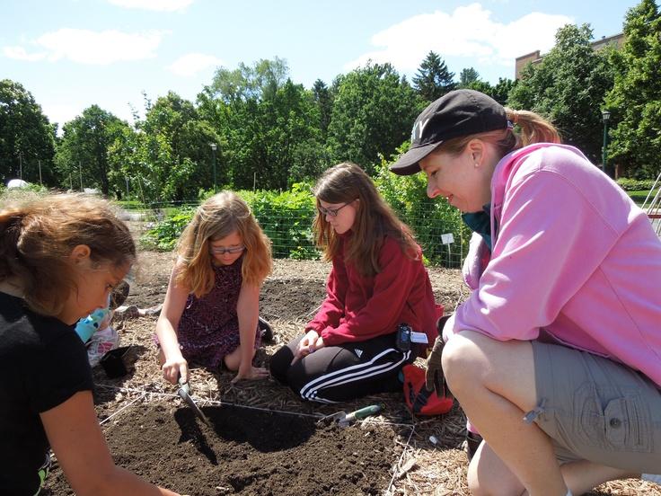 Junior Master Gardeners in Goldie's Garden at the U of M