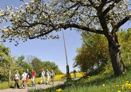 Der Thurgau – eine Landschaft für Ferien und Freizeit. Bei uns gibt es Velorouten, Wanderrouten, Skatingrouten, Rundfahrten auf dem Bodensee, Untersee und Rhein, Klöster, Schlösser, Burgen und viele andere Sehenswürdigkeiten.