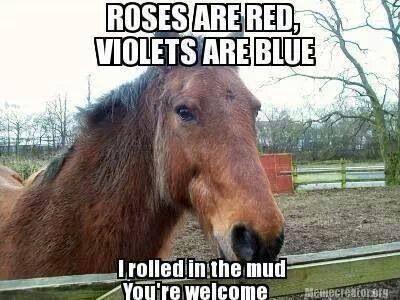 A horses' poem