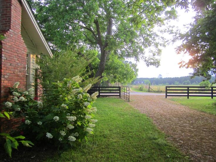 Oak Leaf Hydrangea By The Old Farm House Orchard Pond