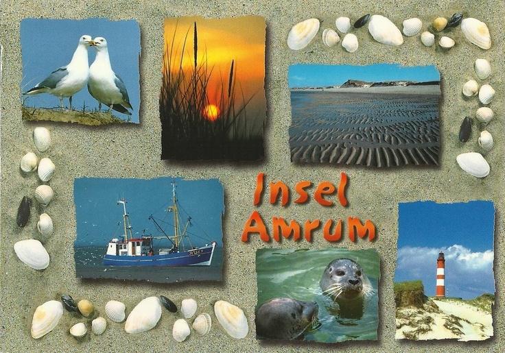 Insel Amrum (North Frisia, Schleswig-Holstein)