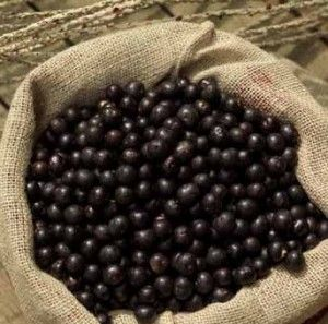 Guide to growing Acai Berry