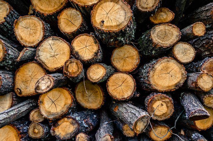Wood circles - null