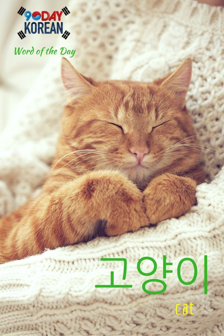 Korean Language - Free downloads and reviews - CNET ...