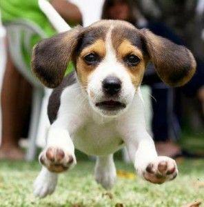 Dog Shaking Ears Natural Remedy