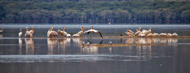 Lake-Nakuru-Nationalpark, Kenia: very impressive www.alexandra-gerrard.de