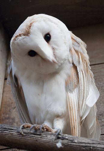 Shuttleworth Birds of Prey-1451. Puur natuur en cultuur beleven: www.desteenakker.nl