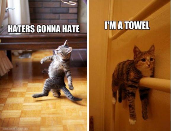 Best 25+ Funny cat memes ideas on Pinterest | Funny cat ... - photo#18