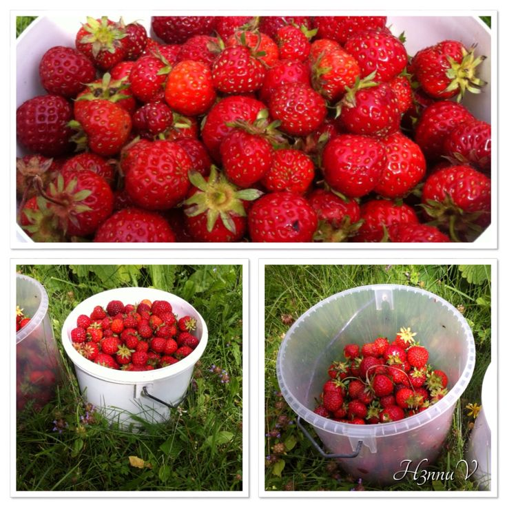 Strawberries from home, July 2014!