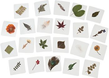 Pressed Feathers Plants & Leaves. This 22 piece set includes a variety of pressed flowers, leaves and herbs.