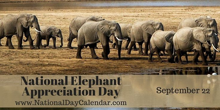 NATIONAL ELEPHANT APPRECIATION DAY National Elephant Appreciation Day is observedevery year on September 22. People of all ages are fascinated by elephants. They are larger than life and highly i…