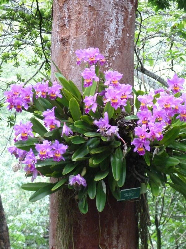 orchids in their natural habitat!!