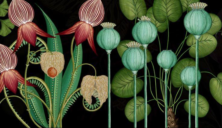 Botanicum. Viaje a través de la botánica con ilustraciones de Katie Scott   El…