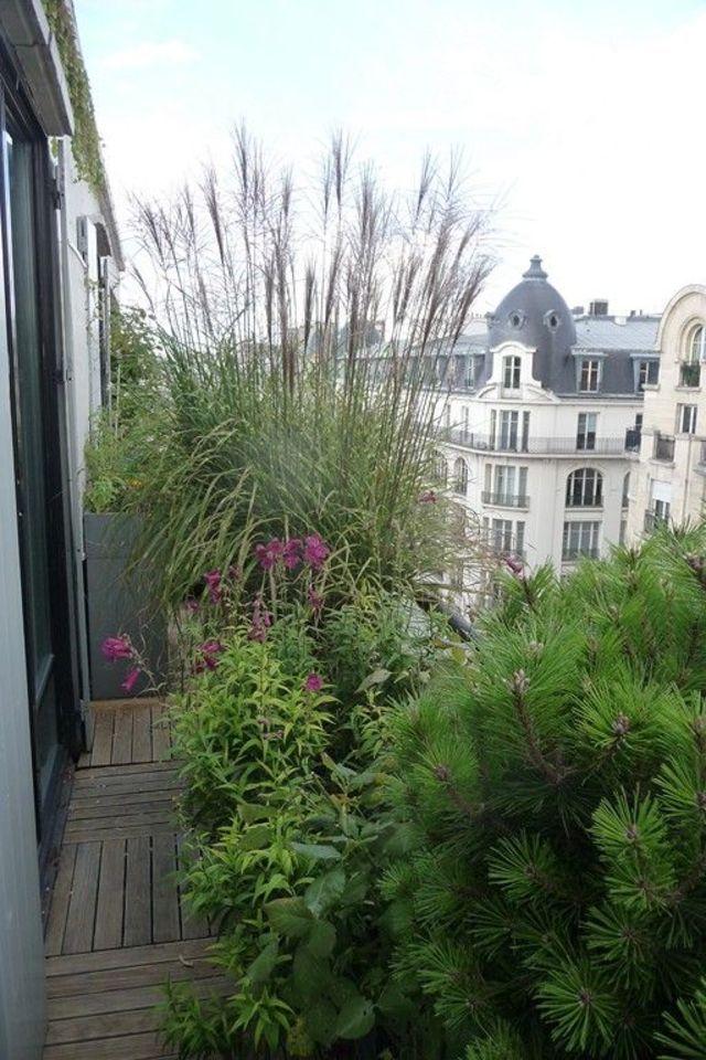 Rideau de verdure sur un balcon parisien