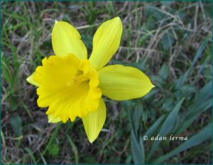 """Floating Yellow Bell - image in updated restored post : """"SilverSneakers Yoga Instructor Course """"YogaStretch – Stress Reduction"""" – Part Two : Similarities & Conclusions"""""""