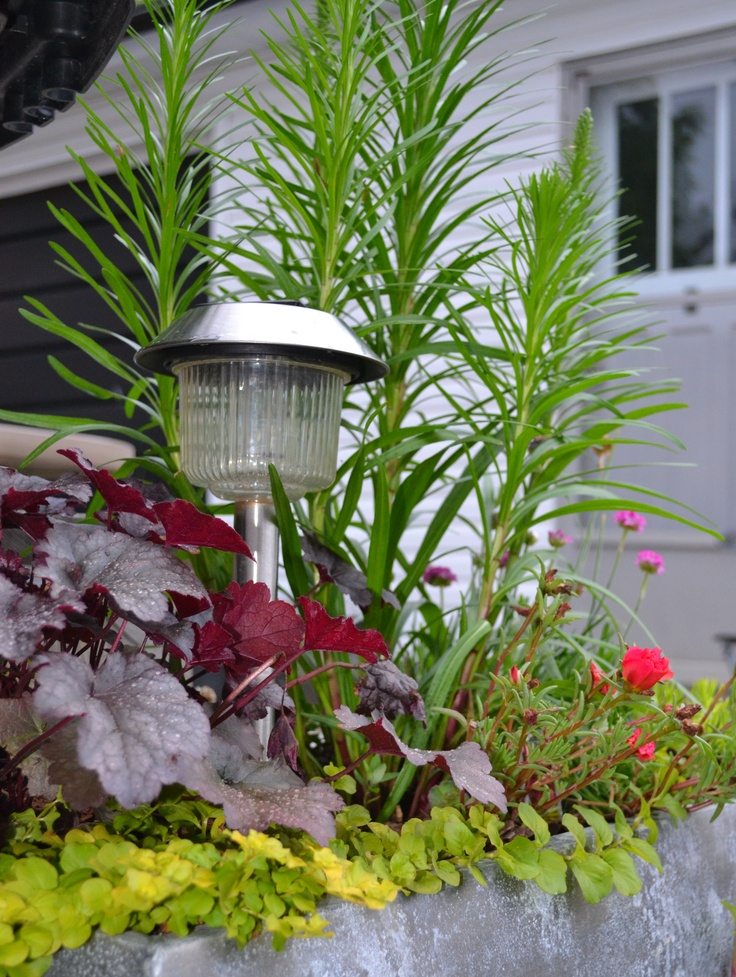 Another Alternative For A Container Using Drought Tolerant