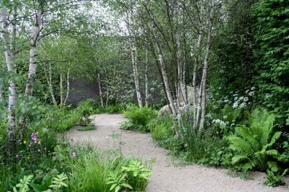 Not suggesting birch but I like the effect of this soft underplanting