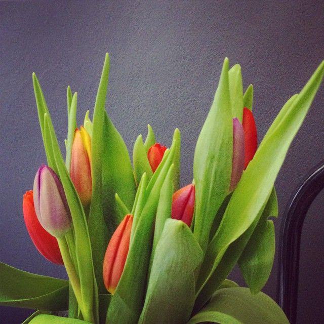 Gdzie ta wiosna? #tulips #flowers