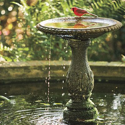54 best Birdbath Splash images on Pinterest Bird baths Bird