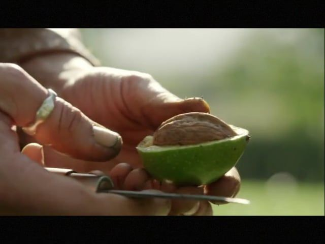 BBC Countryfile Autumn Special with Catherine Lewis collecting walnuts to make her natural inks and dyes; filmed at Sharpham Park Estate and in her Cardiff workshop.
