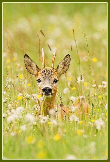 Springtime LL