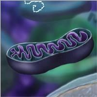 Spanish researchers have found evidence of mitochondrial dysfunction in the skin of fibromyalgia patients, which may be related to oxidative stress, i