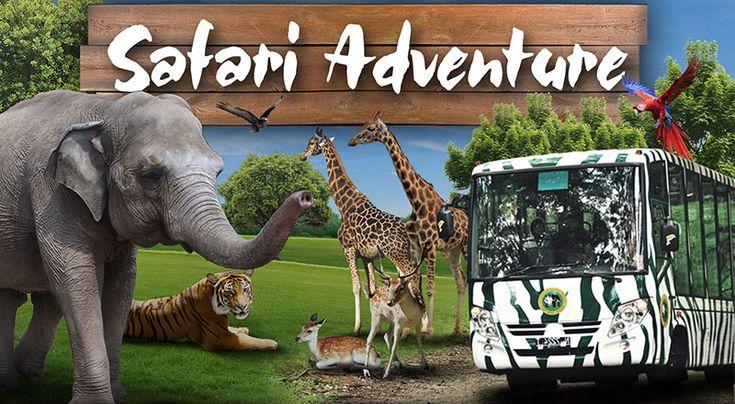 Paket Wisata Bromo Taman Safari 2 Hari 1 Malam, Wisata Bromo Taman Safari Prigen, Bromo Tour Taman Safari, Liburan Bromo Taman Safari Prigen, Tour Bromo Taman Safari Indonesia 2, Safari Park, Taman Safari Prigen, Paket Taman Safari Bromo