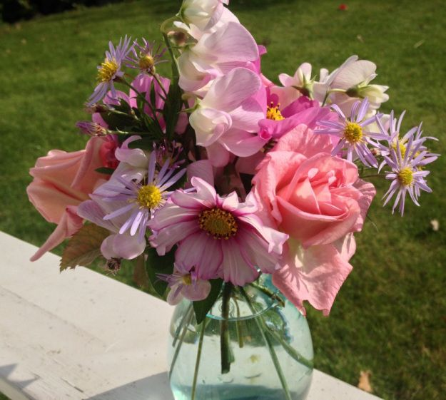 Zelfs in Oktober nog volop: #rozen, #Cosmea Candy Stripes, Aster en #Lathyrus
