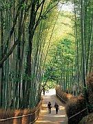 竹林の道の画像