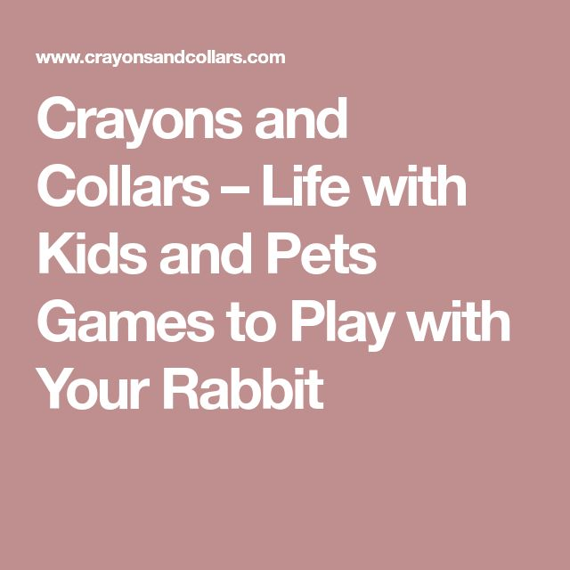 Crayons and Collars – Life with Kids and Pets Games to Play with Your Rabbit