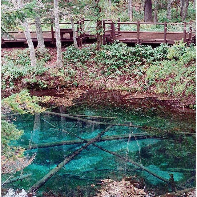 【chihiro.sakurai】さんのInstagramをピンしています。 《神の子池 in Hokkaido #景色#kirei#キレイカスタマイズ #道東 #キレイ#beautiful#景#絶景#keshiki#神秘的 #instagood#sora#ソラ#japanese #hokkaido #blue porn#神の子池#大自然#kumo#yuki#yama#池#森林 #instagramersgallery#photographer #beautiful#photo#Instagood#photography》