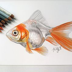 So I have a 45 gallon fish tank dedicated to my many types of goldfish and decided to draw one randomly #goldfish #goldie #fish #draw #drawing #coloredpencil #color #coloredpencildrawing #prismacolor #sketch #illustation #laharstudios #petfish #pet #art #instaart #instafish #instagood #like #follow