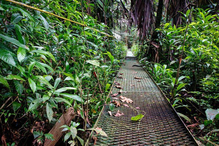 Wildlife Safari Through Tortuguero National Park • Expert Vagabond