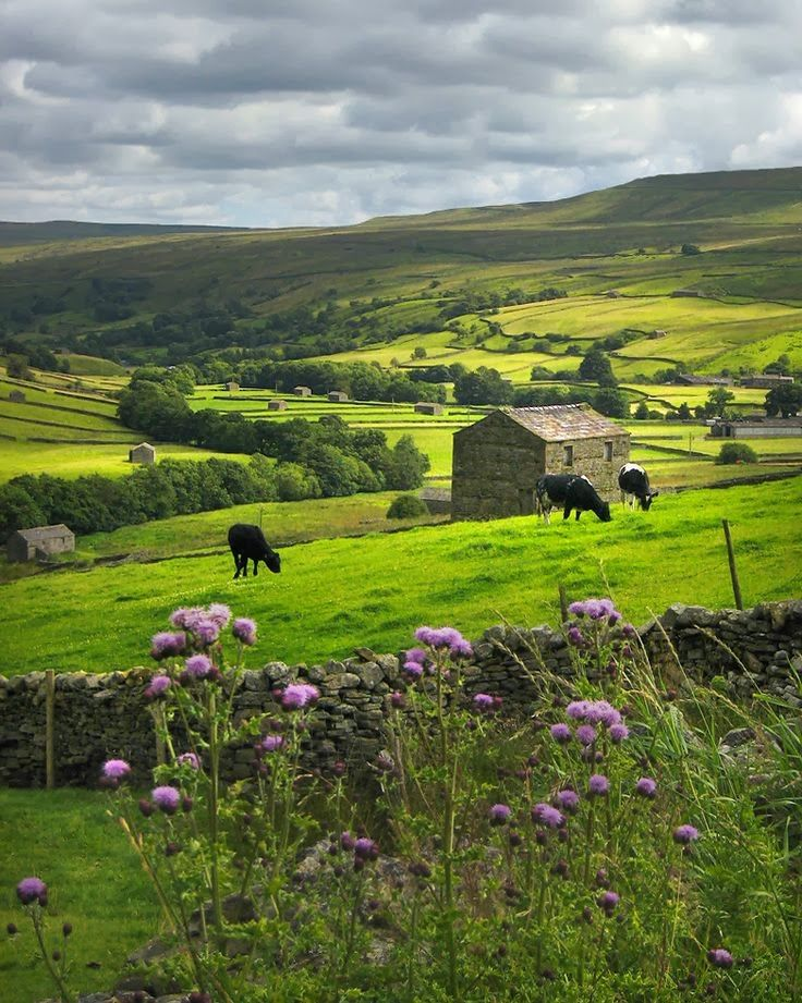 Pastoral Yorkshire Dales, England