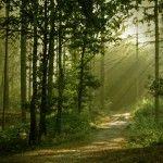 La gestione responsabile delle foreste nel mondo