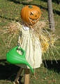 """Scarecrow picture: """"Mary, Mary, quite contrary...."""" Scarecrow in photo has watering can."""