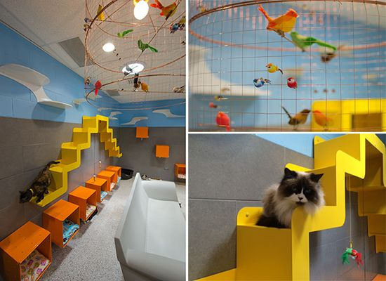 Humane Society of Boulder Valley Gets Catified! Adoption Center Redesigned to Delight Shelter Cats and Visitors