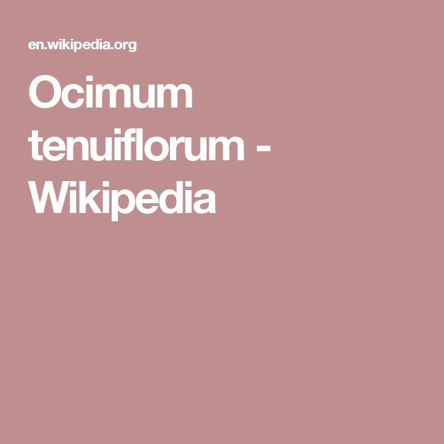 Ocimum tenuiflorum (Holy Basil) - Wikipedia