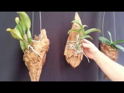 CURIOSIDADE - Vários lugares onde plantar orquídeas - YouTube