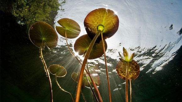 Lumpeet pinnan alta kuvattuna elokuvassa Järven tarina.